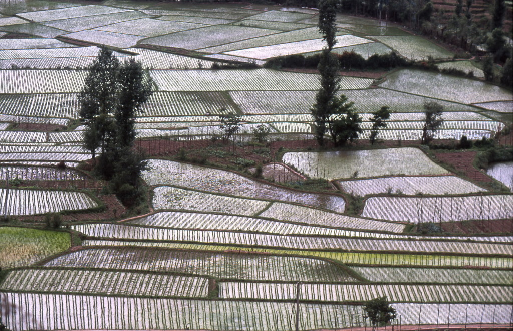 2002-05 China - rijstveldenmondriaan-1800pix