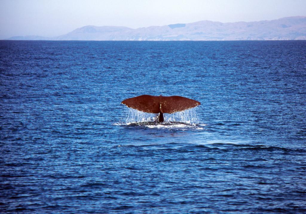 NZ-Zuideiland, Kaikoura, walviskijken - foto HB