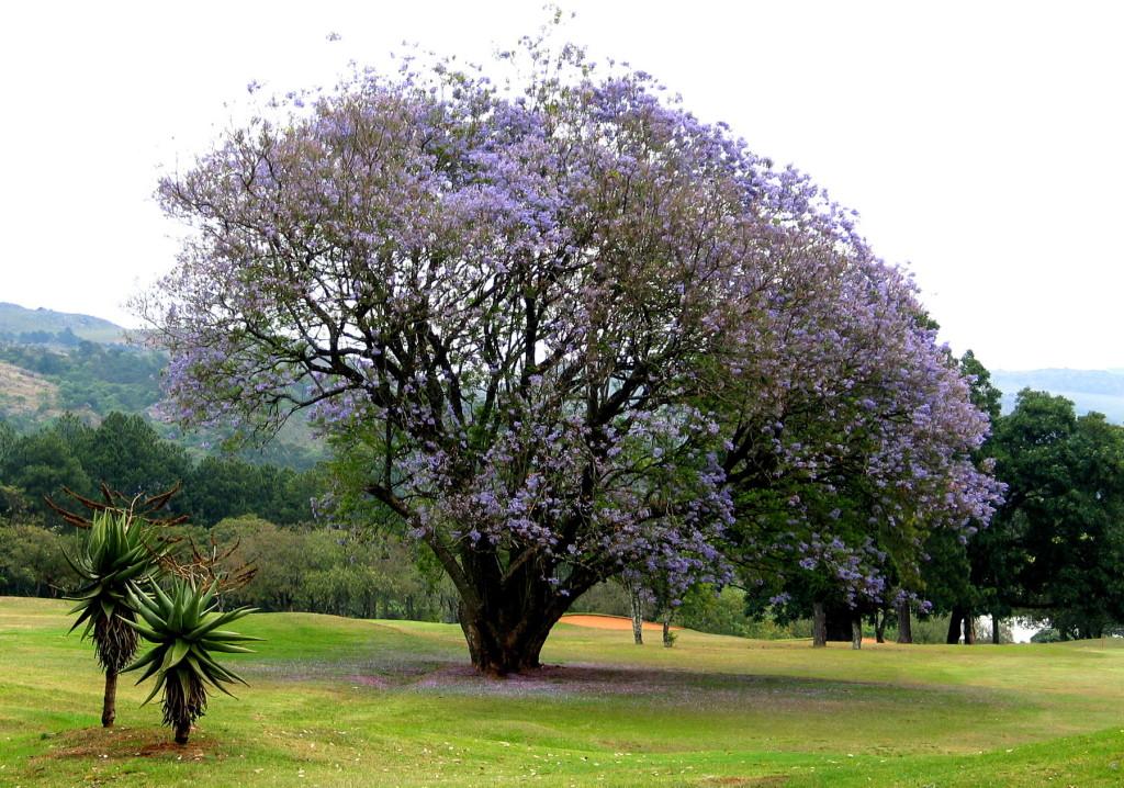 Zuid-Afrika-Img_3805-a4inbewerking-Foto Hebk Butink-1800pix