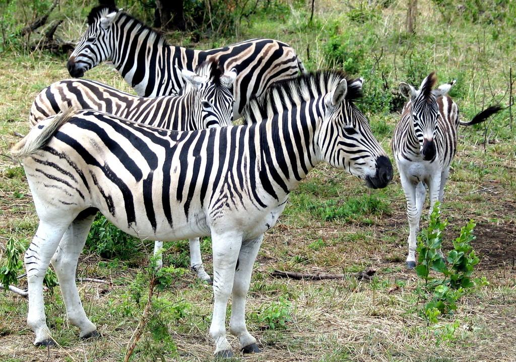 Zuid-Afrika-Img_3905-a4-2-Foto Hebk Butink-1800pix