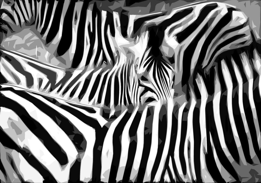 Zuid-Afrika-Img_3905-zebras-grafiek-Foto Hebk Butink-1800pix