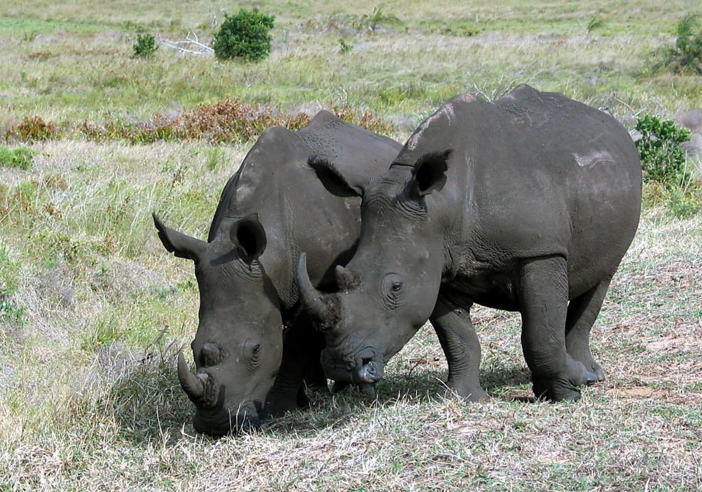 Zuid-Afrika-Img_3945-printversie-Foto Hebk Butink-1800pix