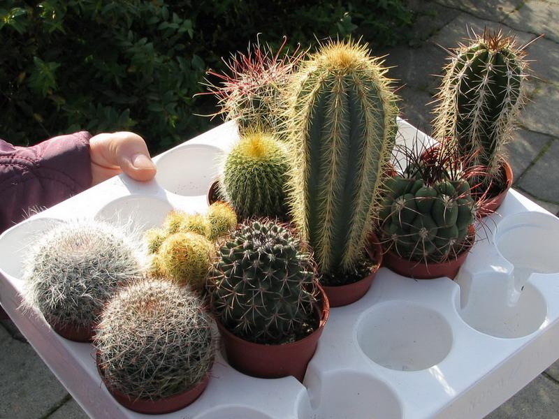 x Mini cactussen cadeautje voor leerlingen basisscholen